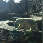 Foto výzva aneb studenti K3 v pražské zoologické zahradě